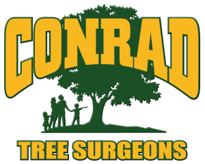 Tree Surgeons Colchester